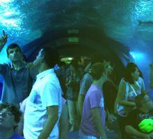 Alumnos del Centro de Educación Especial de Koynos en L'Oceanogràfic de València.